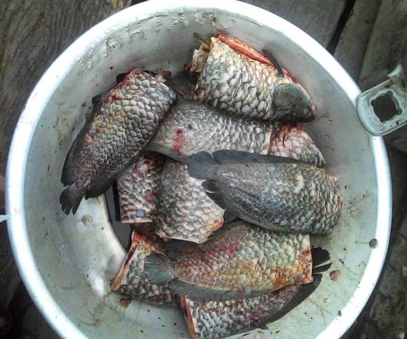 """Manna"" in Africa! Fish miraculously swarm in stricken region providing people with plenty to eat; leftovers sold to pay off debts"
